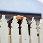 5 mitów o posiadaniu psa