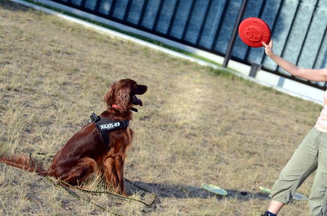 frisbee_dogzilla_3
