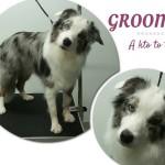 Kariera w psim biznesie: groomer