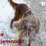 5 najważniejszych obowiązków właściciela psa