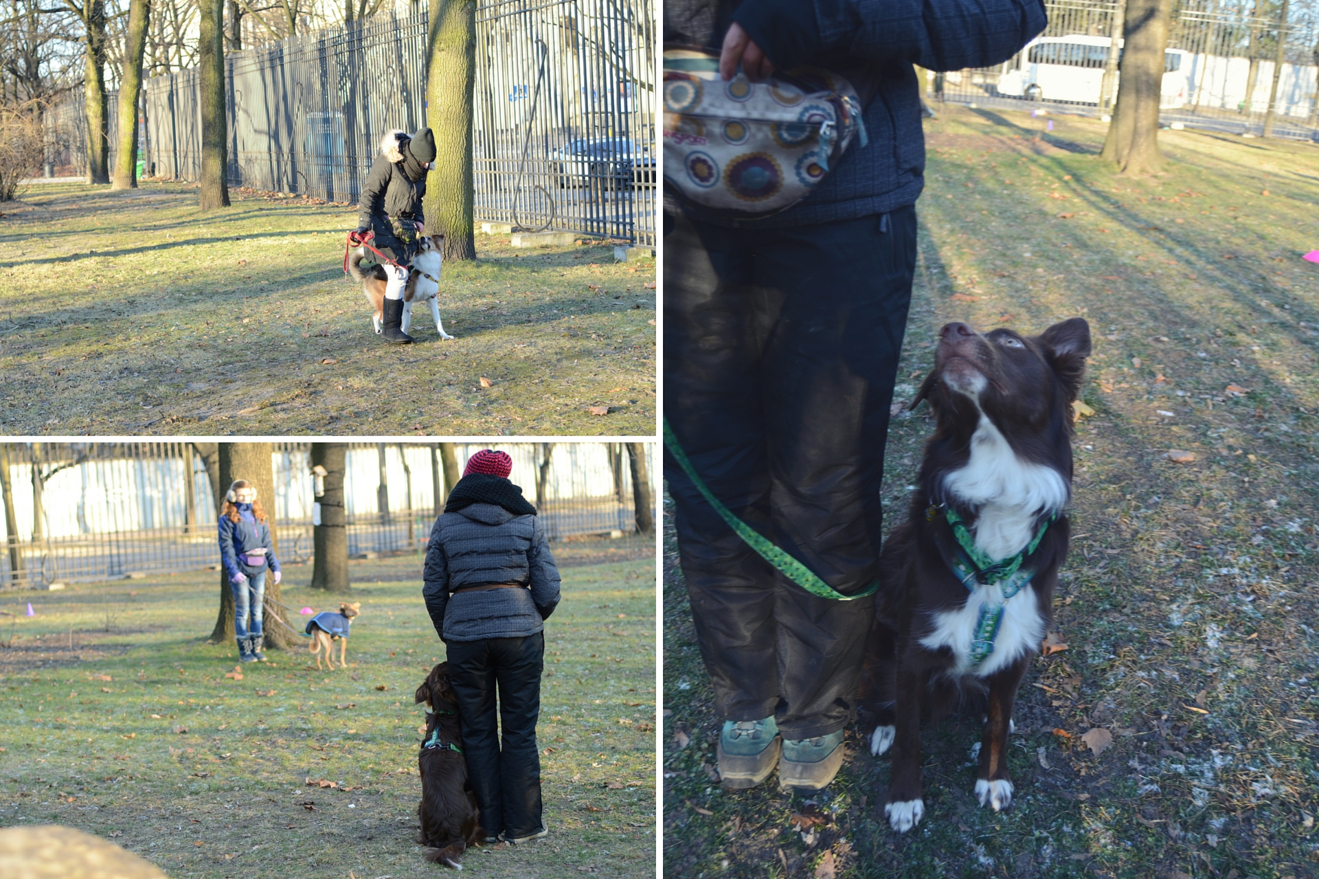 OGR: zdjęcia psów ćwiczących chodzenie przy nodze.