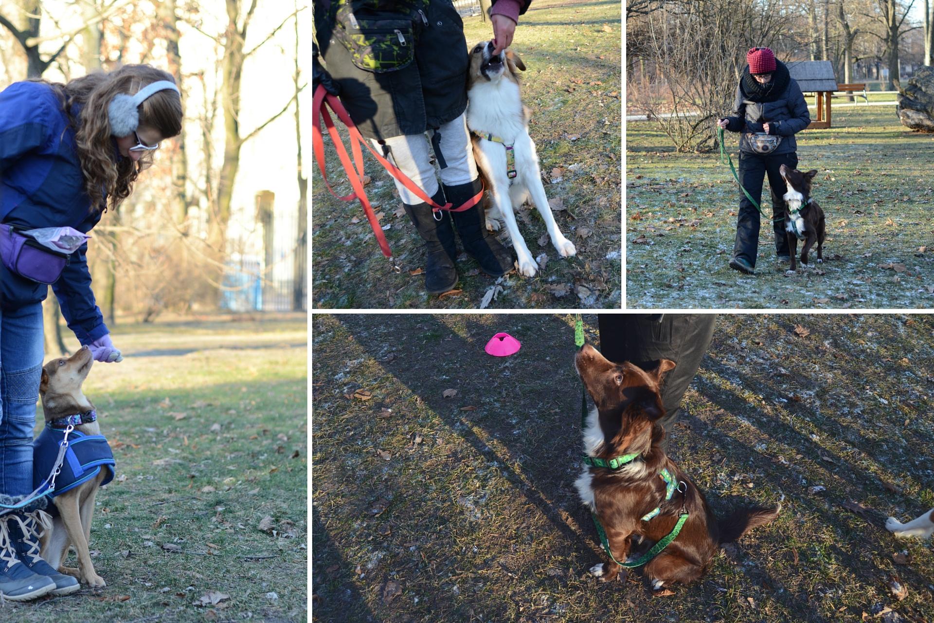 OGR: zdjęcia psów podczas treningu.