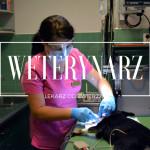Kariera w psim biznesie: lekarz weterynarii