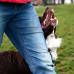 Obedience: dlaczego ćwiczę z trenerem?