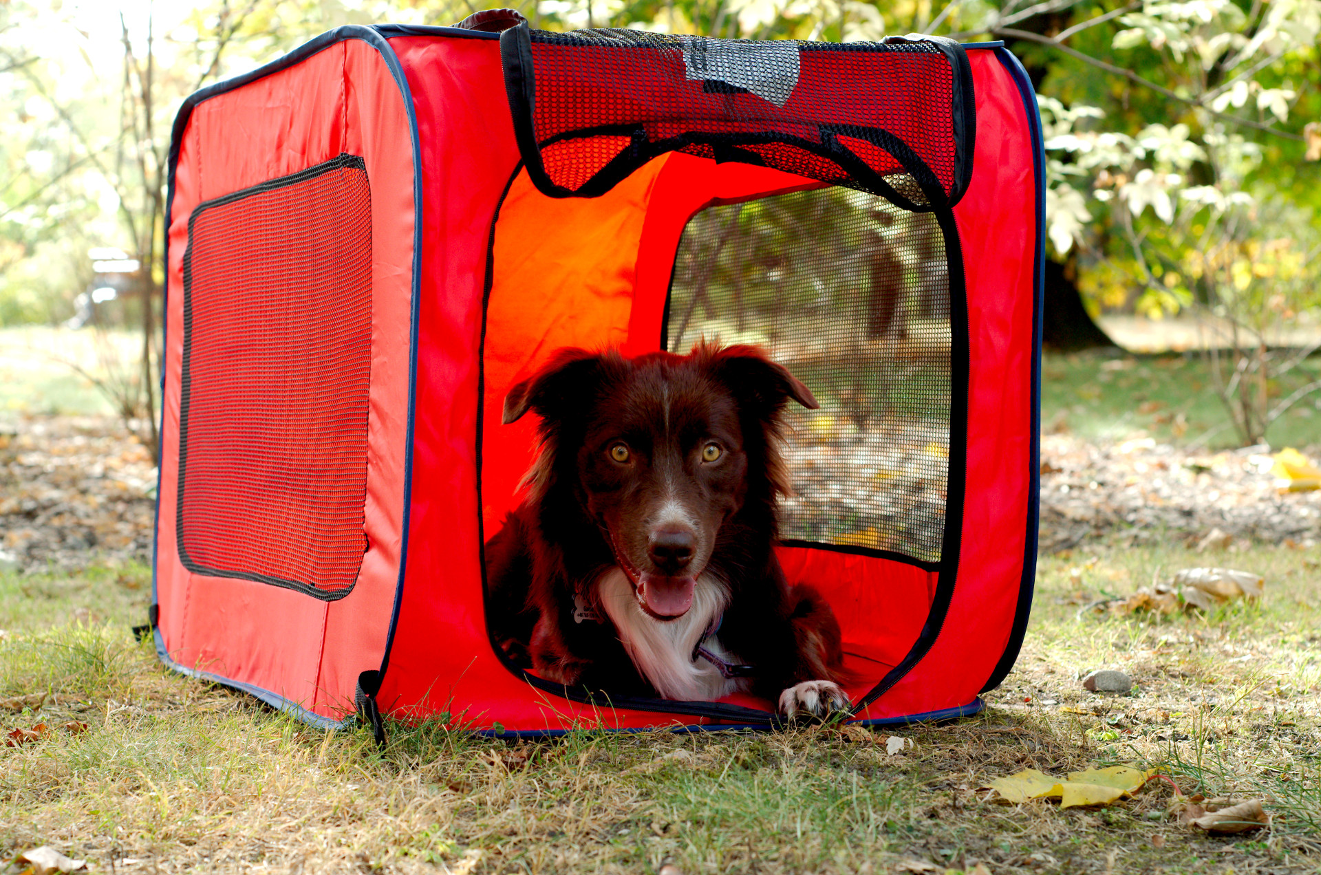 Recenzja: Portable Dog Kennel Pies do kwadratu