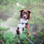 Dlaczego optymistycznie patrzę na programy o psach w TV?