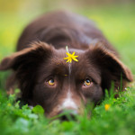 5 rzeczy, których nie warto uczyć swojego psa