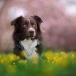 Pies zadbany - pies skrzywdzony