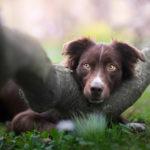 5 zasad – bezpieczeństwo psa na co dzień