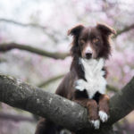 Pies towarzyszący. Czy warto wszędzie zabierać ze sobą psa?