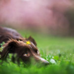 5 oznak psiej dorosłości