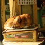 Nowy dom dla psa: egoizm, moralność, dobrostan