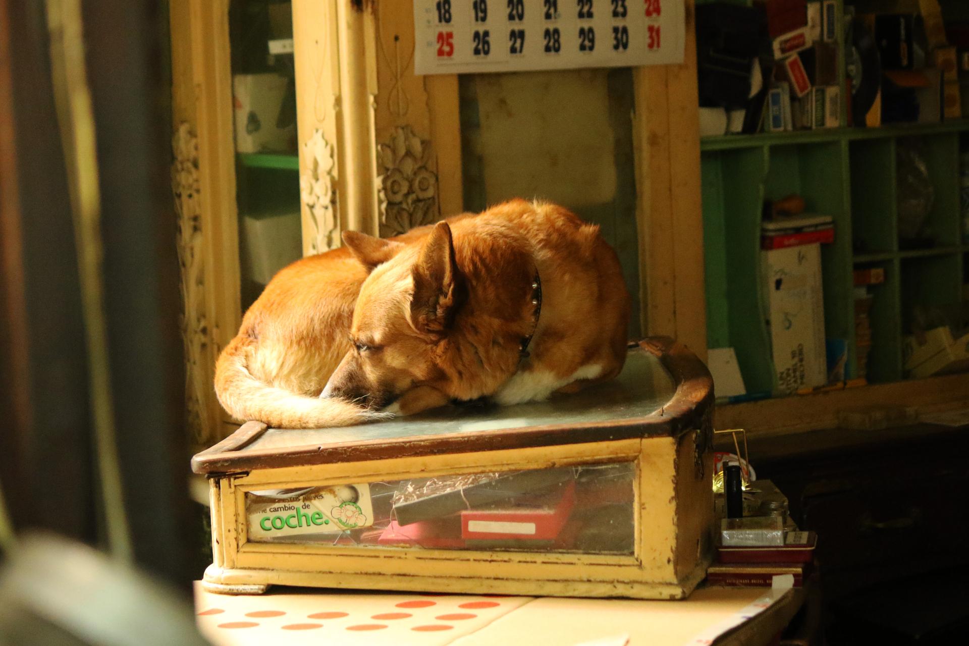 Dodatkowe Nowy dom dla psa: egoizm, moralność, dobrostan - Pies do kwadratu DI15