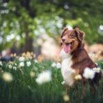 Pies, dobre rady i świeże pieczywo…
