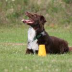 Obedience: 5 sposobów na wzmocnienie ćwiczeń