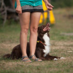 Letni obóz obedience '18