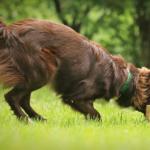 Obedience: 5 sposobów na trenowanie startów